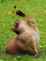 Quelques mesures pour éviter le pica du chat