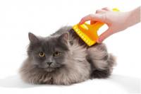 Le traitement des poux chez le chat
