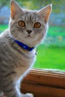 Prévenir la contamination des poux entre chats