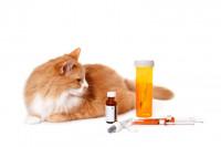 Quelles sont les différents types de vermifuge pour chat ?