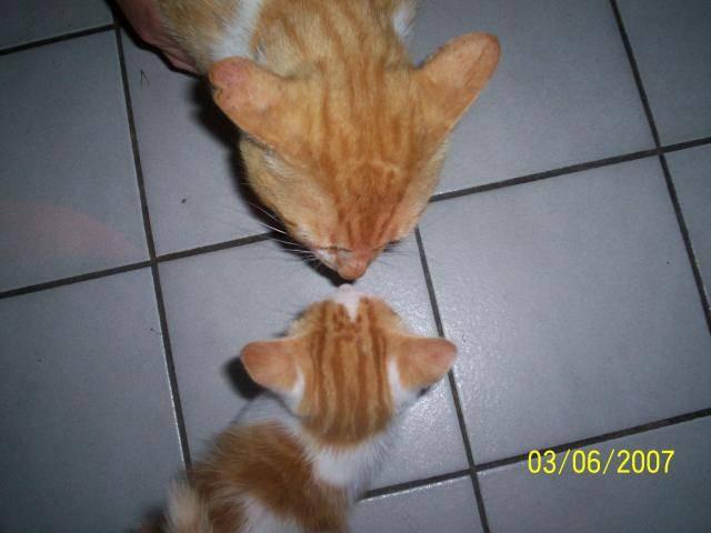 1ere rencontre entre 2 chats