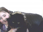 Chat blacky - Shiny persan Femelle (4 ans)