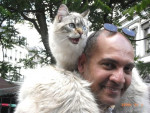 Chat Balinais - Balinais  ()