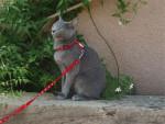 Chat J'aime bien le vent chaud - Bleu Russe  (0 mois)