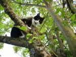 Chat chat européen ou de gouttière talia - Européen Femelle (0 mois)