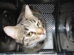 Chat Titoune dans machine à laver - Européen Femelle (0 mois)
