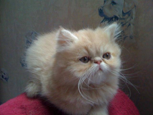 jeune fille à faire le massage de la chatte -
