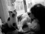 Chat milka angora turc et poupy cavalier king charles - Angora turc  (0 mois)