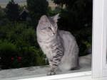 Chat Septembre 2006 - Angora turc  (0 mois)