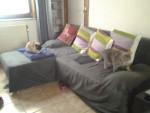 Chat pastissou et louna -  Femelle (3 ans)