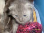 Chat Truffe -  Femelle (0 mois)