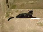 Chat Houille -  Mâle (4 mois)