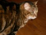 Chat chat de goutière -   (0 mois)