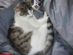 Chat chatte de gouttière -   ()