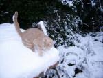 Chat mimine fevrier 2007 -   ()