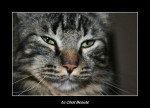 Chat fred 41.jpg -   (0 mois)