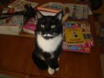 Chat chat de goutiere elthon -   (0 mois)