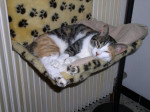 Chat Vanille - goutiere -   (0 mois)