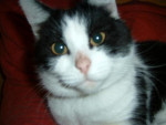 Chat Chatte * Sissy -   (0 mois)