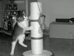 Chat Pêche -   (0 mois)