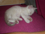 Chat Roméo -   ()