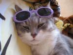 Chat chat de goutiere -   (0 mois)