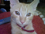 Chat minouche roukine -   (0 mois)