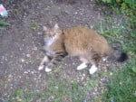 Chat Pirouette -   (0 mois)