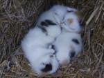 Chat Petits (pas encore de noms) -   (0 mois)