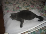Chat brindille -   (0 mois)