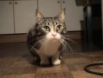 Chat comète -   (0 mois)