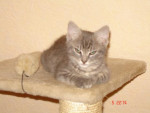 Chat tronion chat de goutiere -   (0 mois)