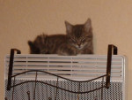 Chat tronion il est trop mignon -   (0 mois)