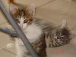 Chat tronion et pirate les 2 fréres -   (0 mois)