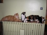 Chat Mes Amours de chats -   (0 mois)