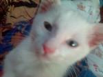 Chat LEO, chat croisé -   (0 mois)