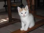 Chat bounty le petit dernier -   (0 mois)