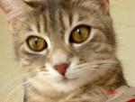 Chat athena -   (0 mois)