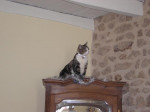 Chat Frimousse -   (0 mois)