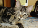 Chat Charlotte !!! -   (0 mois)