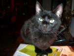 Chat Erwan, chat de gouttière. -   (0 mois)