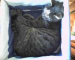 Chat virgule dans son panier -   (0 mois)