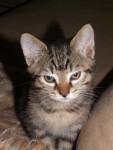 Chat Chat de gouttière CARTOUCHE -   (0 mois)