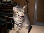Chat cartouche -   (0 mois)