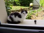 Chat angora de gouttière -   (0 mois)