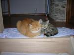 Chat bounty et milka -   (0 mois)