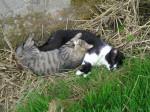 Chat chats de gouttière !!! -   (0 mois)