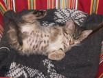 Chat Cartouche chat de gouttière -   ()