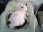 Chat marseille -   (0 mois)