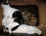 Chat Comment amortir un fauteuil !! -   (0 mois)